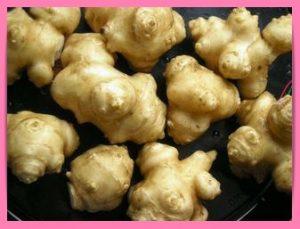 キクイモ 流行野菜