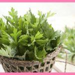 よもぎの人気で簡単なレシピと保存方法!栄養素や効能・効果、旬は?